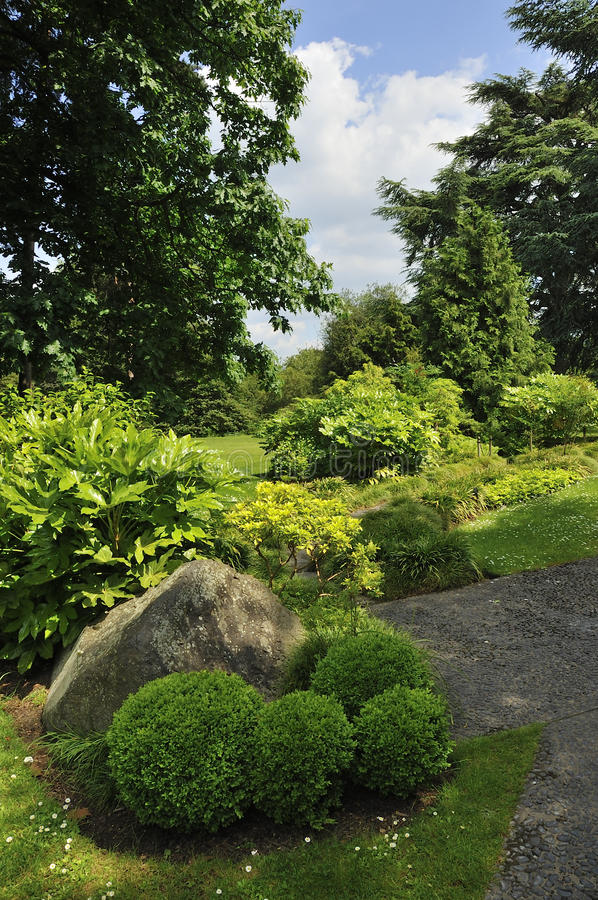 Abstract topiary or karikomi. Japanese garden with large rock in foreground surounded by pruned shrubs of varying sizes creating an abstract expression of form royalty free stock images
