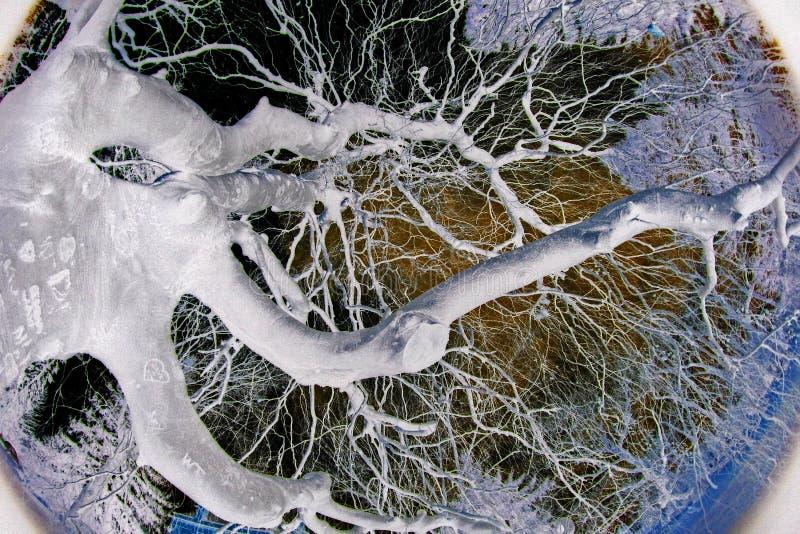 abstract tree στοκ φωτογραφία με δικαίωμα ελεύθερης χρήσης
