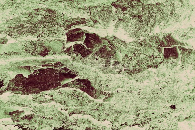 Abstract grunge tree bark textured green sepia filter background stock photography