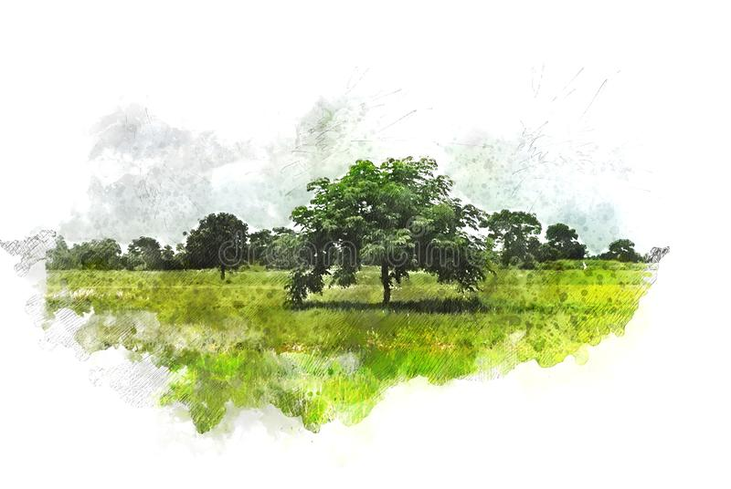 Abstract colorful tree and field landscape in Thailand on watercolor illustration painting background. stock photography