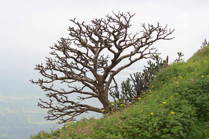 Abstract tree. A sheded tree on the edge of hill royalty free stock photos