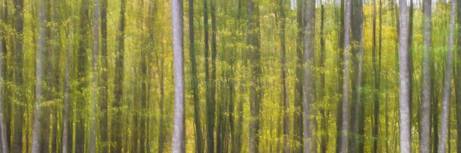 Abstract trees in high mountain. Abstract mountain trees from Italy. At about 2000 meters above sea level a traditional moving photo stock image