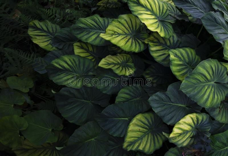 Abstract tropical forest freshment green leaf in the jungle stock images