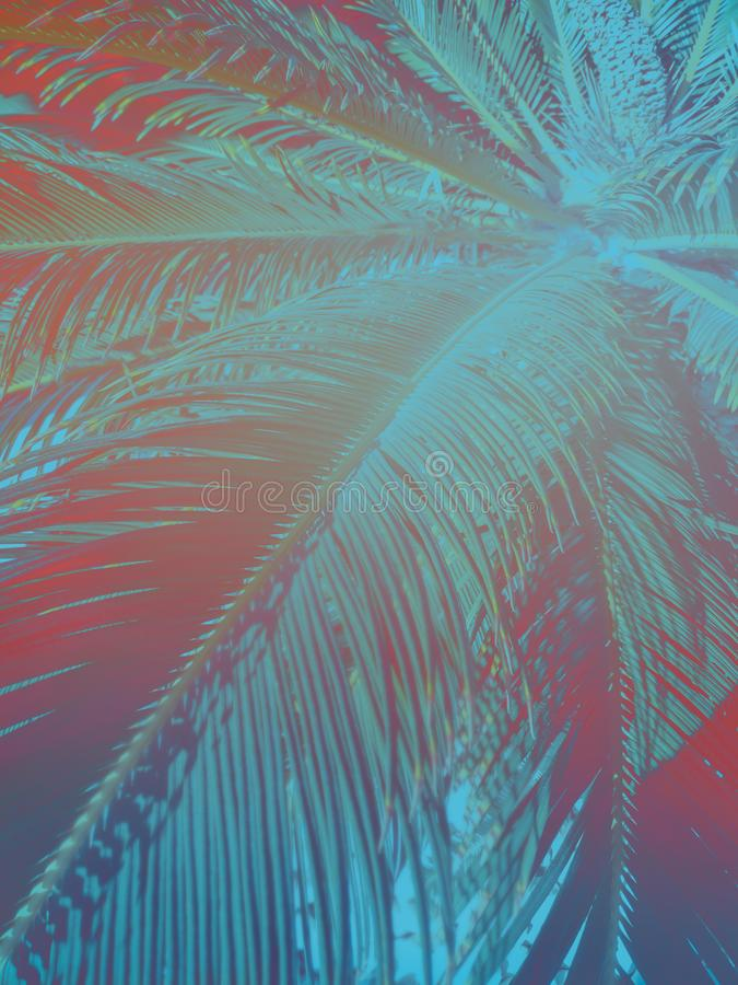 Abstract tropical nature background. Long palm tree leaves in vintage style with gradient teal turquoise pink tones. Funky style royalty free stock photos