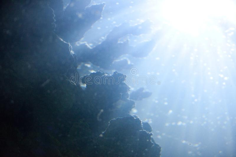 Abstract underwater background with corals and seaweed in the bright sunlight through the water royalty free stock image