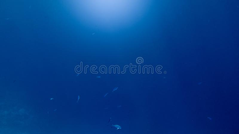 Abstract underwater image of fish school swimming in the deep ocean. Sun light rays shining through water surface stock images
