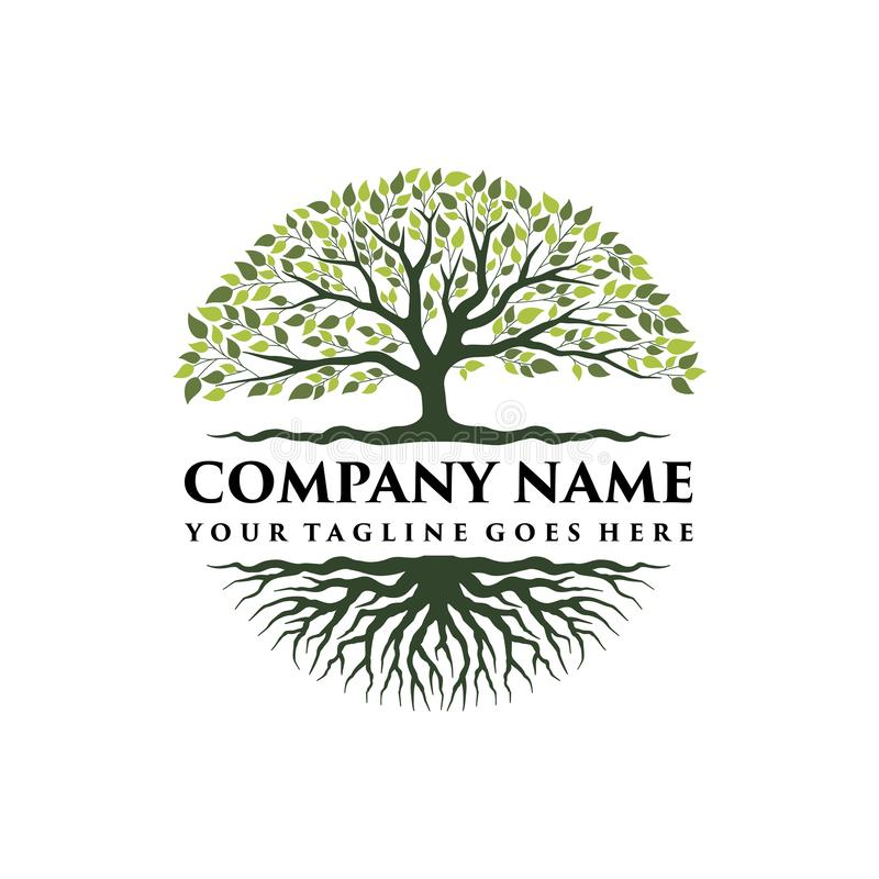 Abstract vibrant tree logo design, root vector - Tree of life logo design inspiration. On white background stock illustration