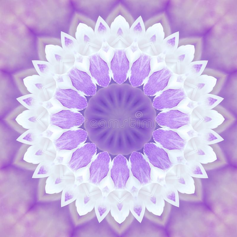 Abstract violet background mandala flora pattern, wild white an vector illustration