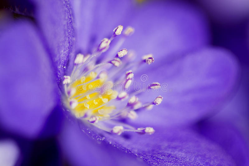 Abstract of the violet flower stock photography