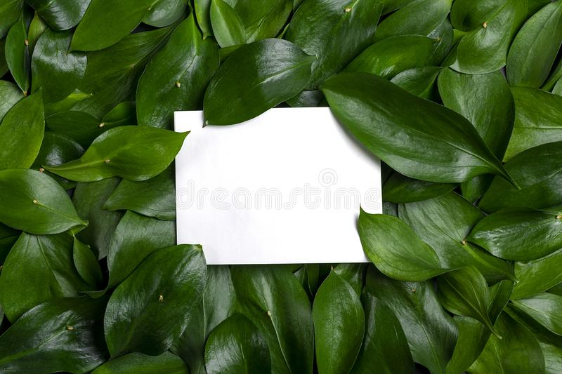 Abstract wallpaper Creative layout made of  dark mint green leaves with paper card note . Flat lay. Nature concept. Mock up royalty free stock images