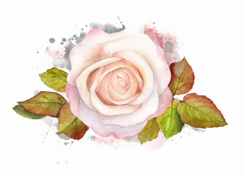 Abstract watercolor rose with leaves on white background. Watercolor painting grunge illustration royalty free illustration