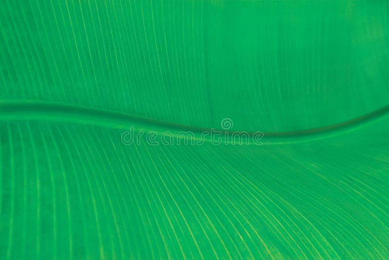 Abstract wavy geometric background, close-up of green leaf of palm tree with space for text. royalty free stock photos