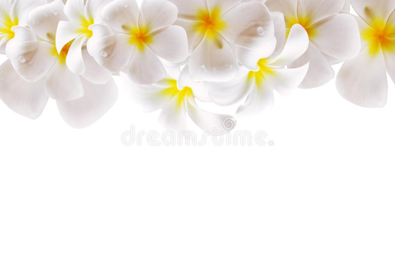 Abstract white flower background with space stock photo image of download abstract white flower background with space stock photo image of petal isolated mightylinksfo Images