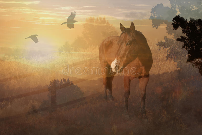 Download A Horse In A Meadow With Trees And Crows. Stock Photo - Image: 31175694