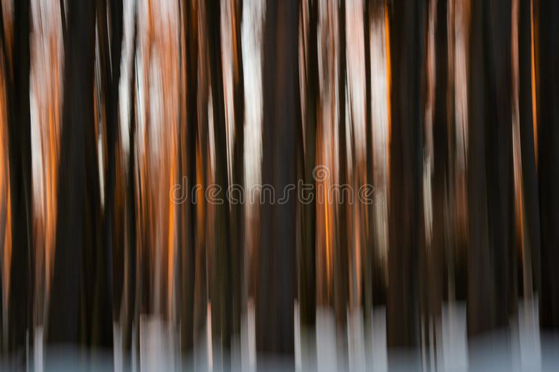 Abstract winter forest at sunset - wiping effect royalty free stock photos
