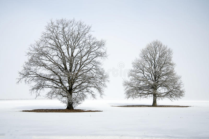 Abstract winter landscape with a lone tree in white snow. Winter landscape with a lone tree in white snow stock photography
