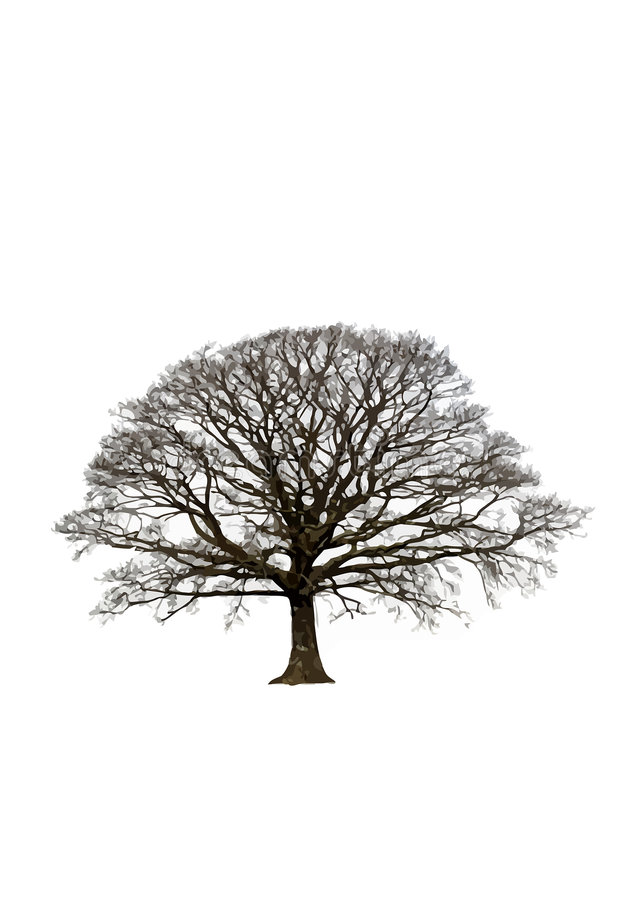 Download Abstract Winter Oak Tree Stock Images - Image: 4055734