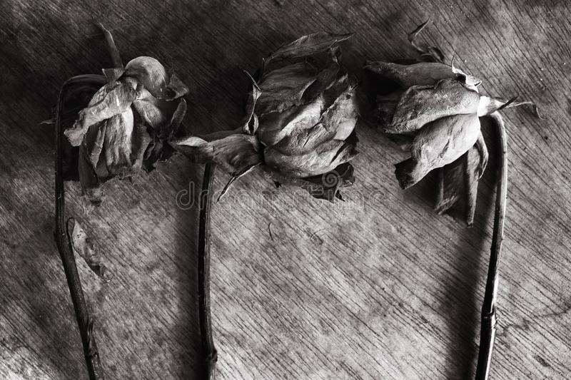 Abstract Withered rose stock photos