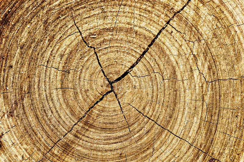 Abstract wood spiral. Ancient crack style royalty free stock image