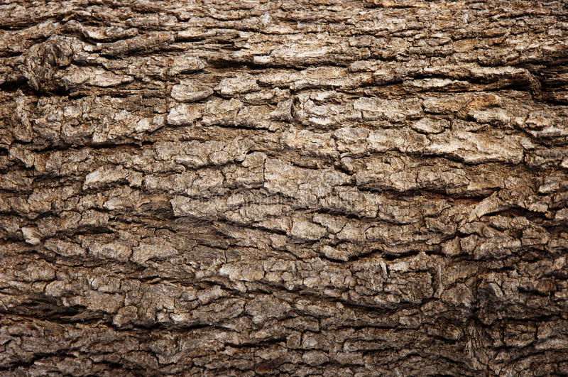 Abstract Wood Texture Bark. An Abstract Wood Brown Bark Texture royalty free stock photo