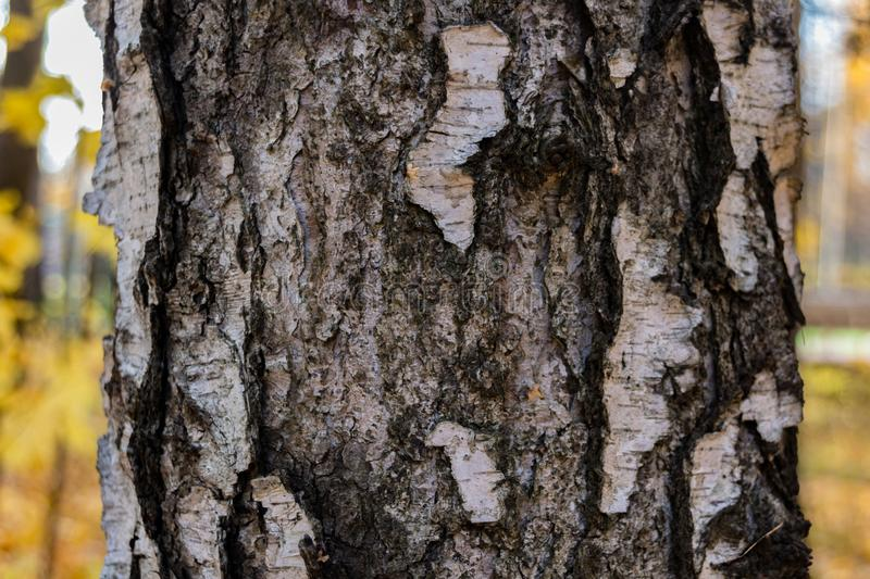 Abstract wood texture bark royalty free stock images