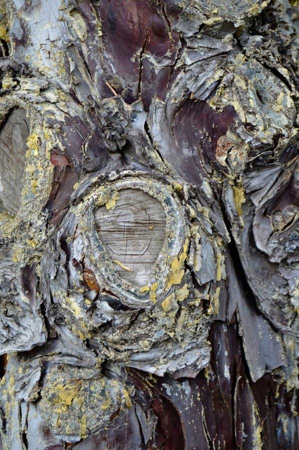 Abstract wood texture bark, cypress tree. Plant, firewood. stock photo