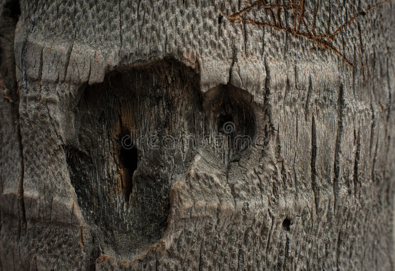 Abstract wood texture royalty free stock images