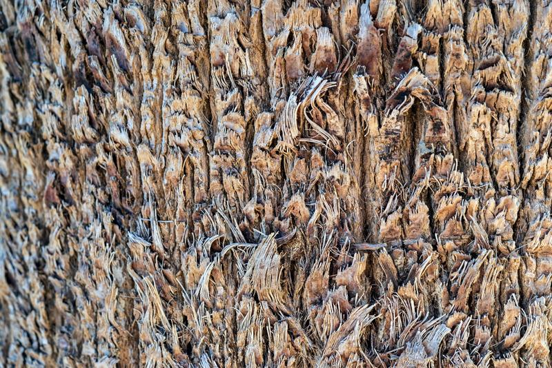 Abstract wooden texture stock photography