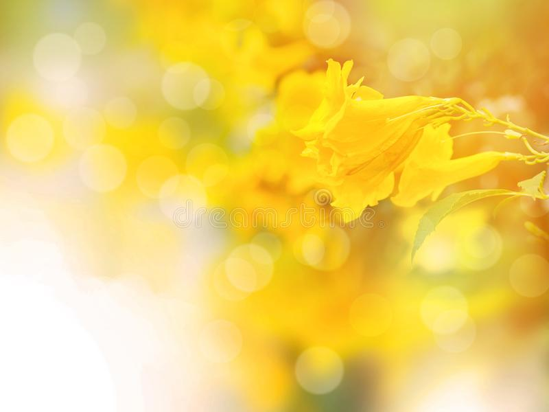 Abstract yellow floral background with copy space royalty free stock images
