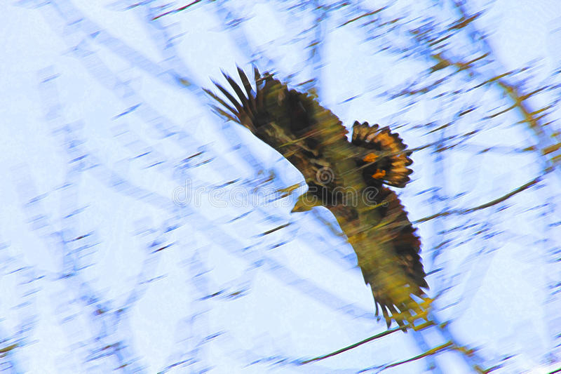 Abstract Young Eagle in Flight stock photo