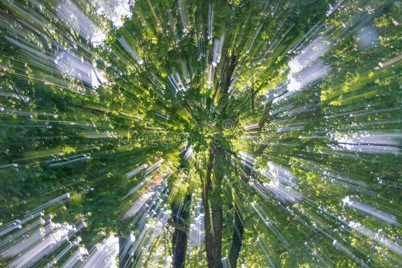 Abstract zooming effect of plant royalty free stock photos