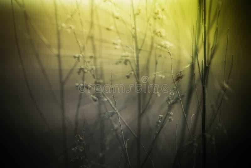 Abstracte aardachtergrond met wild bloemen en installatiessilhouet royalty-vrije stock afbeeldingen