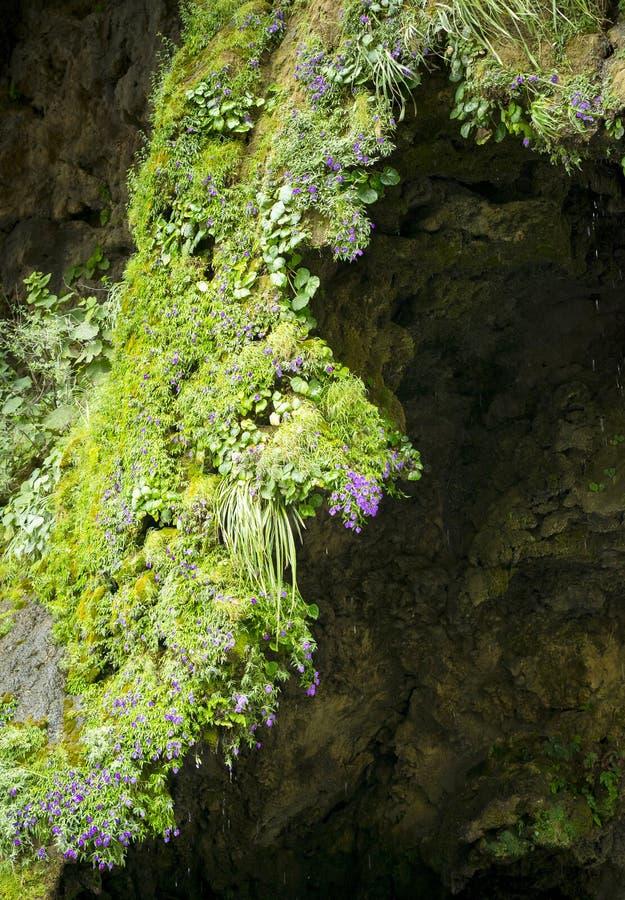 Abstracte Aardachtergrond van Moss And Flowers royalty-vrije stock fotografie