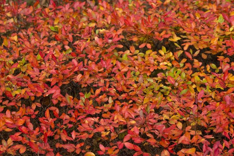 Abstracte Achtergrond: Autumn Leaves stock fotografie