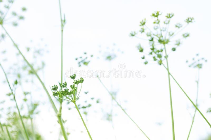 Abstracte achtergrond met groen gras stock illustratie
