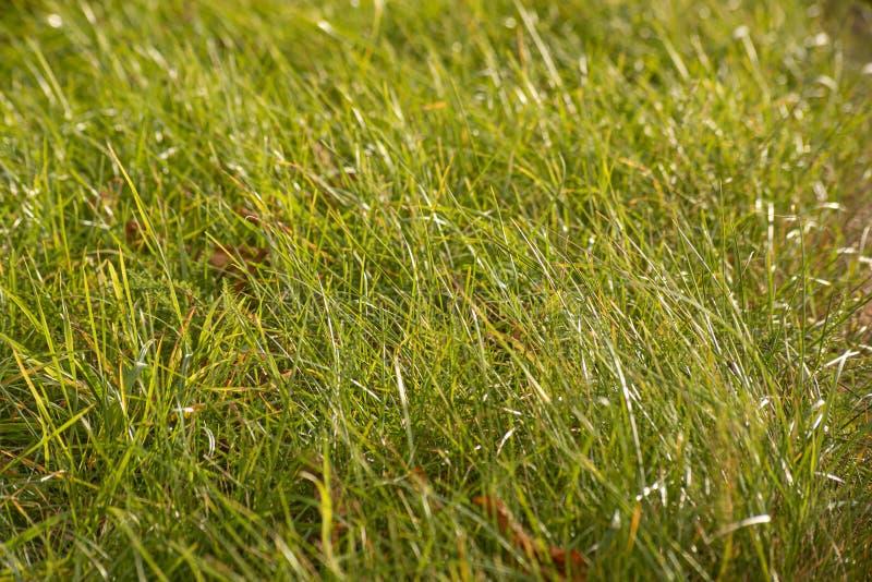 Abstracte achtergrond met wild reëel gras royalty-vrije stock afbeeldingen