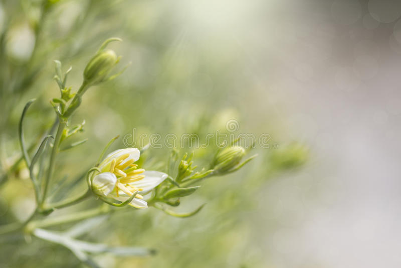 Abstracte achtergrond met wilde bloemen royalty-vrije stock fotografie
