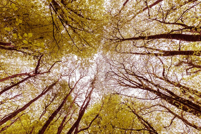 Abstracte Autumn Tree Canopy en Silhouetten 3 royalty-vrije stock foto