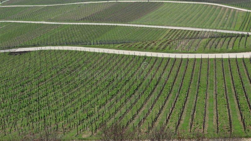 Abstracte beeldenbeelden met wijnbouw in Rudesheim, Duitsland royalty-vrije stock foto's