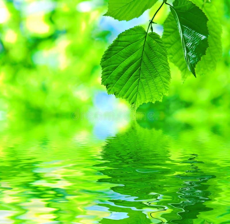 Abstracte bladeren op water stock foto