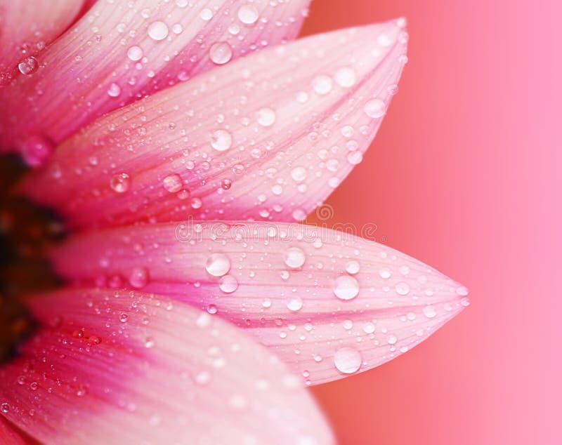 Abstracte bloembloemblaadjes stock afbeelding