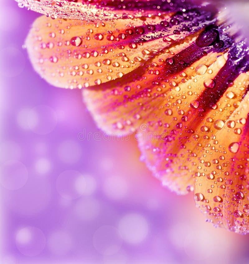 Abstracte bloembloemblaadjes, bloemengrens stock foto's