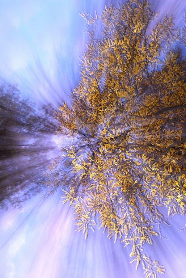 Abstracte boom royalty-vrije stock afbeeldingen