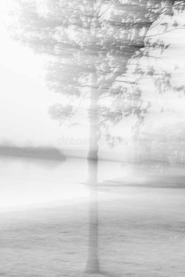 Abstracte boom met status nog terwijl zich het bewegen stock illustratie
