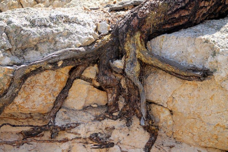 Abstracte boomwortels stock afbeeldingen