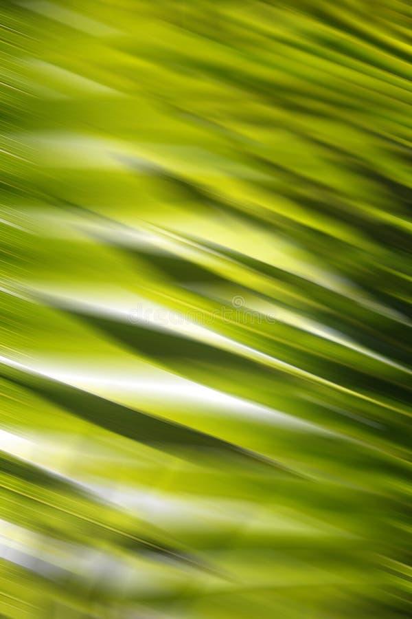 Abstracte BosAchtergrond stock afbeeldingen
