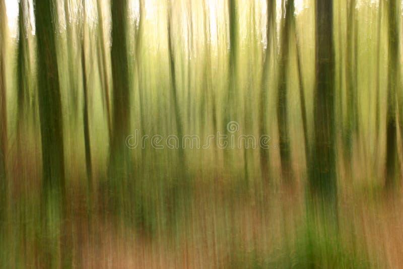 Abstracte bosbouw vage achtergrond stock fotografie