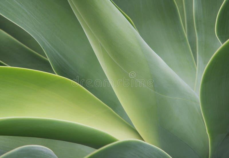 Abstracte cactus royalty-vrije stock fotografie