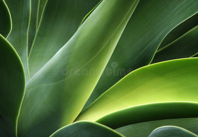 Abstracte cactus royalty-vrije stock foto's