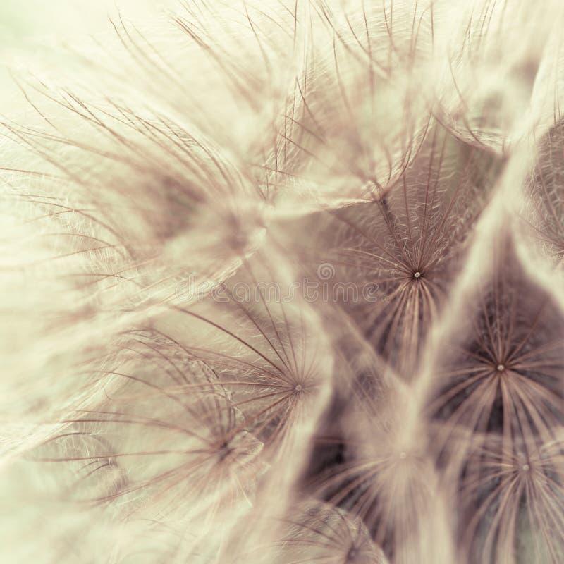 Abstracte close-up van een weideschorseneer stock afbeeldingen